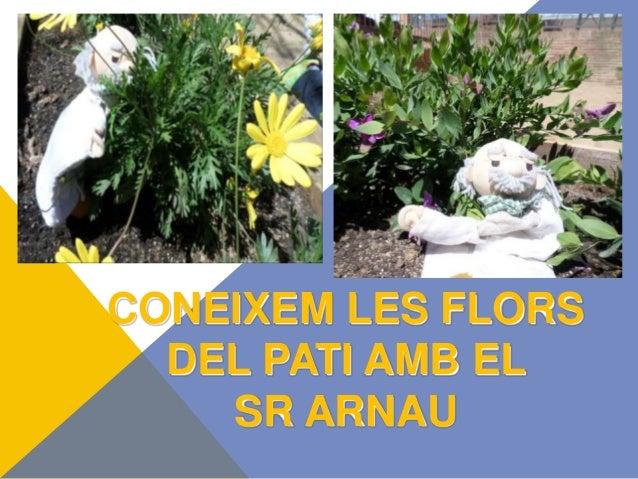 CONEIXEM LES FLORS DEL PATI AMB EL SR ARNAU