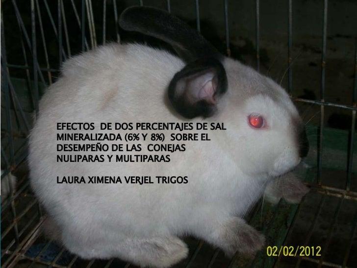 EFECTOS DE DOS PERCENTAJES DE SALMINERALIZADA (6% Y 8%) SOBRE ELDESEMPEÑO DE LAS CONEJASNULIPARAS Y MULTIPARASLAURA XIMENA...