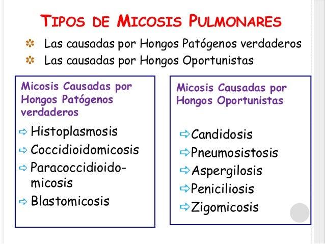 Infecciones fungicas en pacientes vih y sida - Tipos de hongos en la pared ...