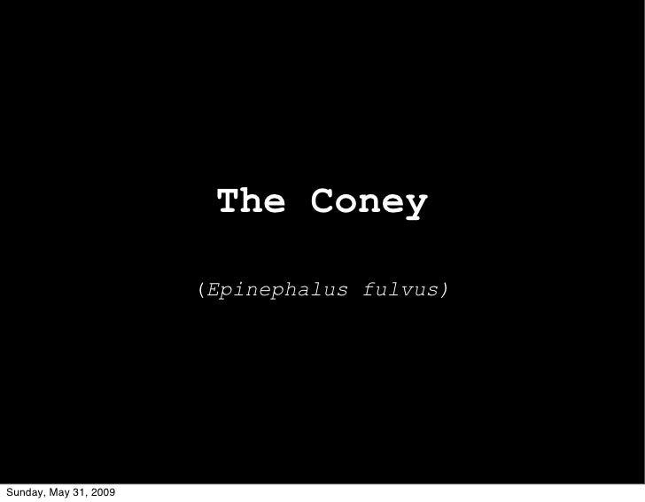 The Coney                         (Epinephalus fulvus)     Sunday, May 31, 2009