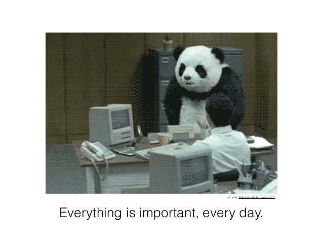 Everything is important, every day. source: littleanimalgifs.tumblr.com