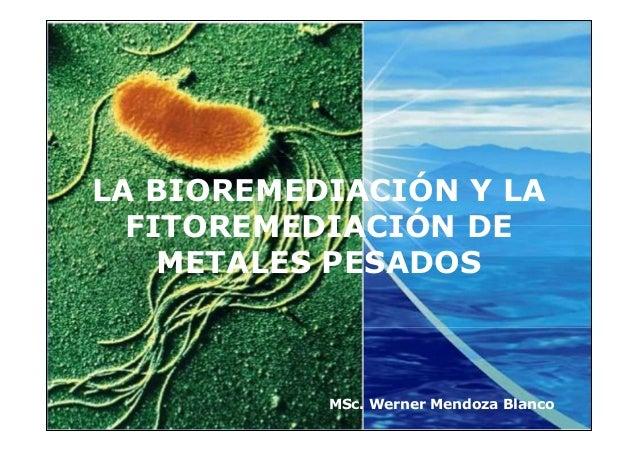 LA BIOREMEDIACIÓN Y LA  FITOREMEDIACIÓN DE    METALES PESADOS         Company         LOGO             MSc. Werner Mendoza...