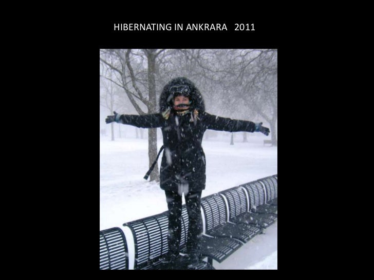 HIBERNATING IN ANKRARA 2011