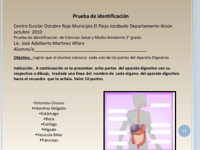 37 Prueba de identificación Centro Escolar Octubre Rojo Municipio El Piojo Jorobado Departamento Atzún octubre 2010 Prueba...
