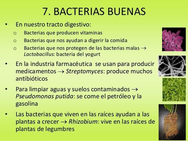 Conferencia 2º epo las bacterias