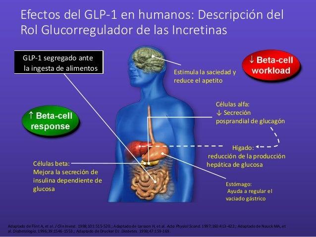 Efectos del GLP-1 en humanos: Descripción del Rol Glucorregulador de las Incretinas Estimula la saciedad y reduce el apeti...
