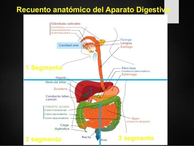 Generalidades del aparato digestivo en Imagenología Slide 2