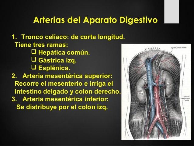 Generalidades del aparato digestivo en Imagenología Slide 3