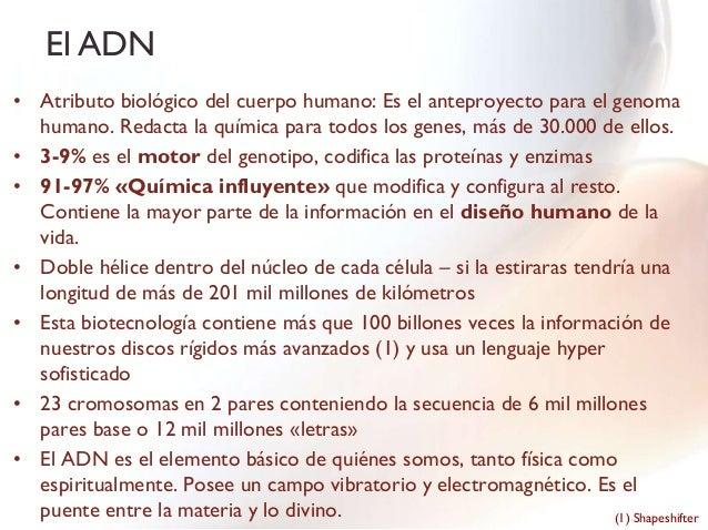 El ADN• Atributo biológico del cuerpo humano: Es el anteproyecto para el genoma  humano. Redacta la química para todos los...