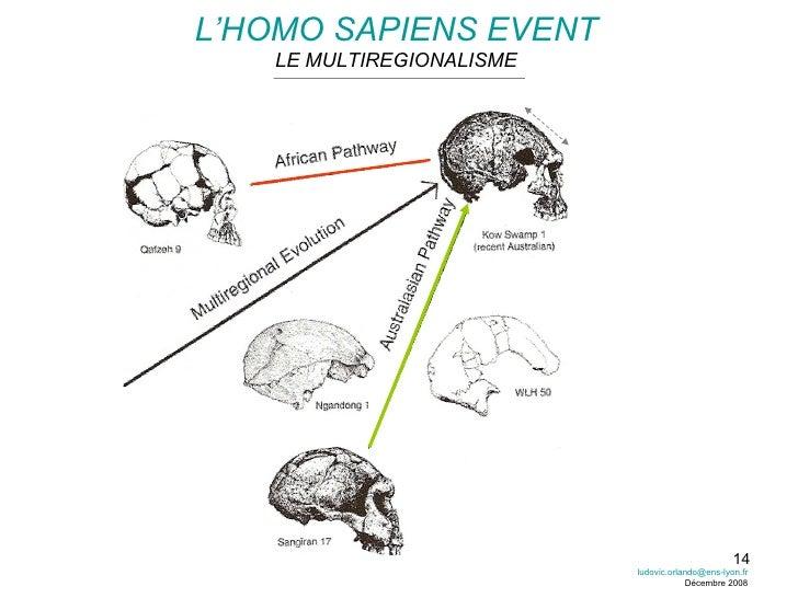 L'HOMO SAPIENS EVENT LE MULTIREGIONALISME [email_address] Décembre 2008