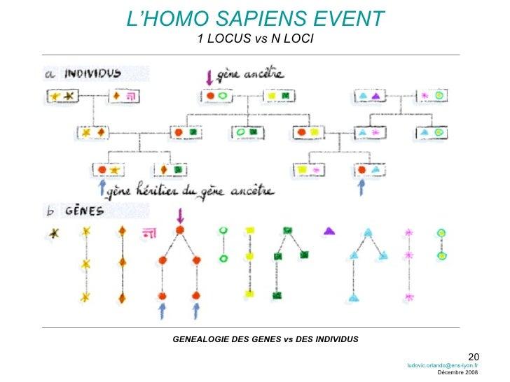 L'HOMO SAPIENS EVENT 1 LOCUS vs N LOCI GENEALOGIE DES GENES vs DES INDIVIDUS [email_address] Décembre 2008