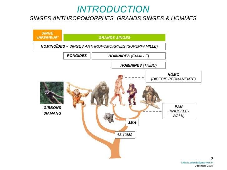 INTRODUCTION SINGES ANTHROPOMORPHES, GRANDS SINGES & HOMMES 8MA 12-13MA HOMO (BIPEDIE PERMANENTE) PAN (KNUCKLE-WALK) PONGI...