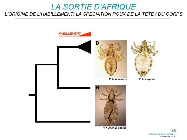 LA SORTIE D'AFRIQUE L'ORIGINE DE L'HABILLEMENT: LA SPECIATION POUX DE LA TÊTE / DU CORPS P. humanus capitis P. h. humanus ...
