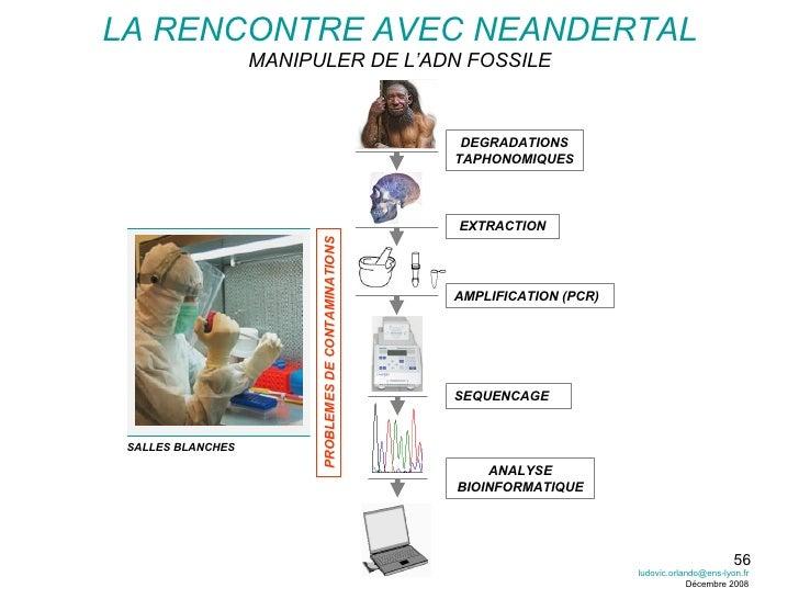 AMPLIFICATION (PCR) EXTRACTION SEQUENCAGE ANALYSE BIOINFORMATIQUE DEGRADATIONS TAPHONOMIQUES PROBLEMES DE CONTAMINATIONS S...