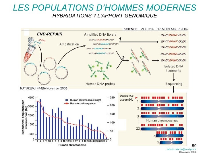 LES POPULATIONS D'HOMMES MODERNES HYBRIDATIONS ? L'APPORT GENOMIQUE END-REPAIR 1 2 [email_address] Décembre 2008
