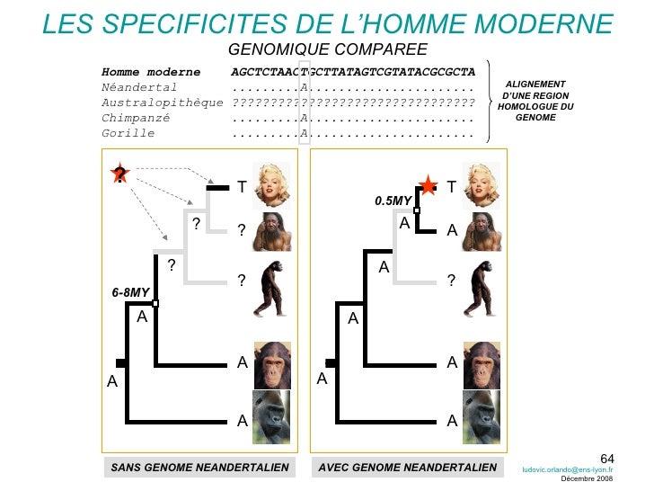 LES SPECIFICITES DE L'HOMME MODERNE GENOMIQUE COMPAREE A T A ? A 0.5MY Homme moderne  AGCTCTAACTGCTTATAGTCGTATACGCGCTA Néa...