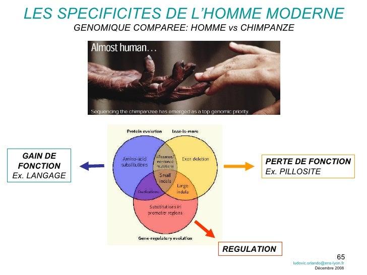 LES SPECIFICITES DE L'HOMME MODERNE GENOMIQUE COMPAREE: HOMME vs CHIMPANZE [email_address] Décembre 2008 GAIN DE FONCTION ...