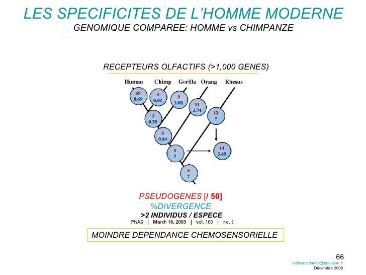 LES SPECIFICITES DE L'HOMME MODERNE GENOMIQUE COMPAREE: HOMME vs CHIMPANZE RECEPTEURS OLFACTIFS (>1,000 GENES) PSEUDOGENES...