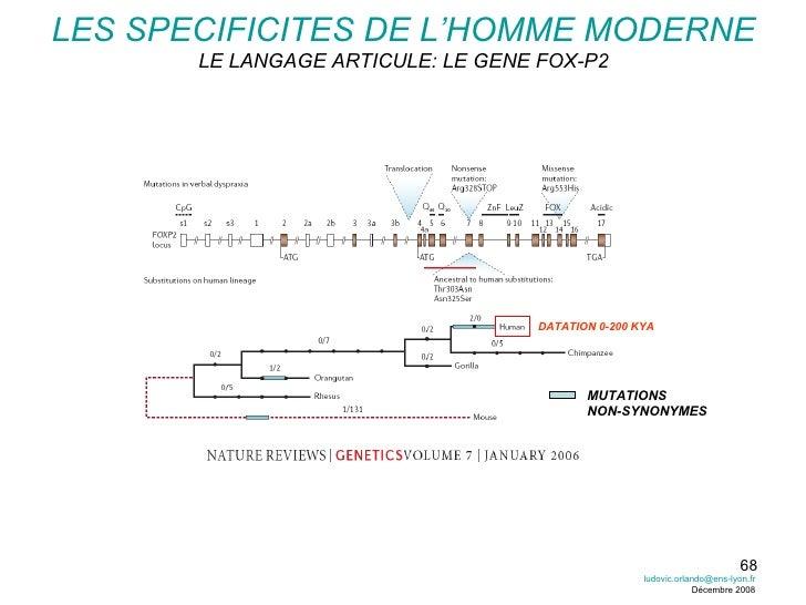 LES SPECIFICITES DE L'HOMME MODERNE LE LANGAGE ARTICULE: LE GENE FOX-P2 MUTATIONS NON-SYNONYMES DATATION 0-200 KYA [email_...
