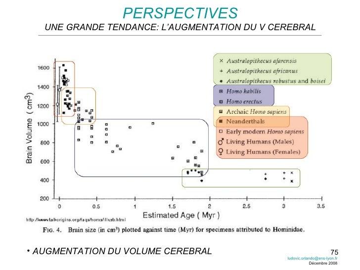 PERSPECTIVES UNE GRANDE TENDANCE: L'AUGMENTATION DU V CEREBRAL <ul><li>AUGMENTATION DU VOLUME CEREBRAL </li></ul>[email_ad...