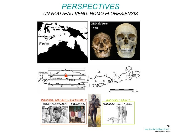 PERSPECTIVES UN NOUVEAU VENU: HOMO FLORESIENSIS 380-410cc ~1m INDIVIDU MALADE / DIFORME ? MICROCEPHALIE  PIGMEES INDIVIDU ...