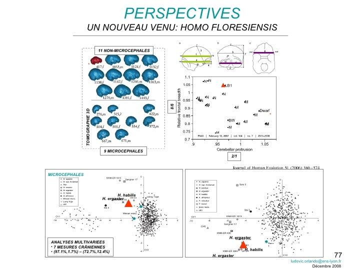 PERSPECTIVES UN NOUVEAU VENU: HOMO FLORESIENSIS MICROCEPHALES <ul><li>ANALYSES MULTIVARIEES </li></ul><ul><li>7 MESURES CR...