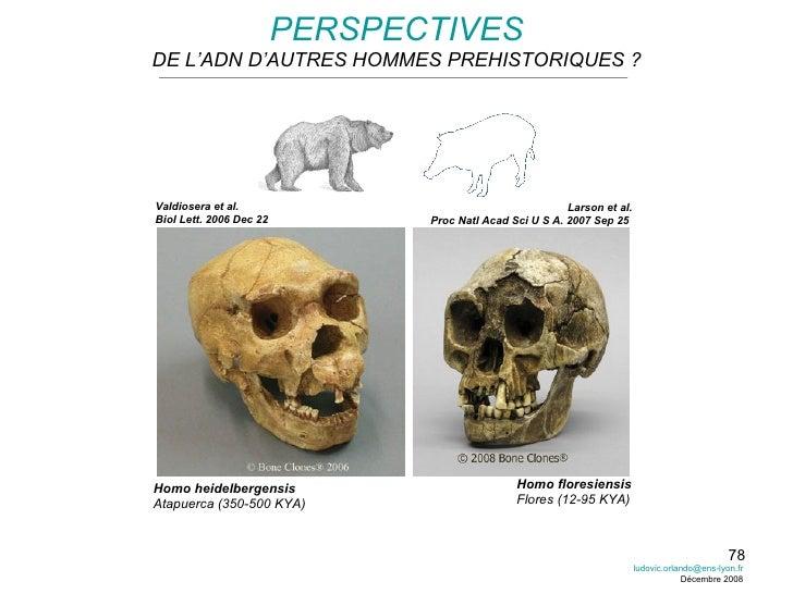 PERSPECTIVES DE L'ADN D'AUTRES HOMMES PREHISTORIQUES ? Homo heidelbergensis Atapuerca (350-500 KYA) Homo floresiensis Flor...