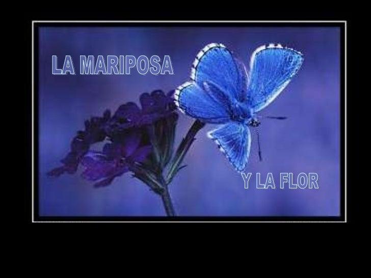Cierta vez, un hombre pidió a Dios  una flor...                                     ...y una                              ...