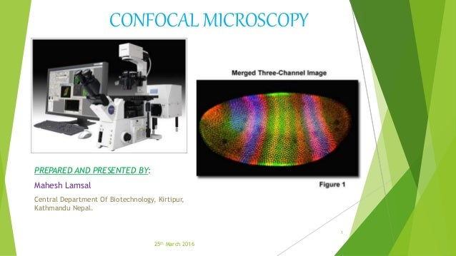CONFOCAL MICROSCOPY PREPARED AND PRESENTED BY: Mahesh Lamsal Central Department Of Biotechnology, Kirtipur, Kathmandu Nepa...
