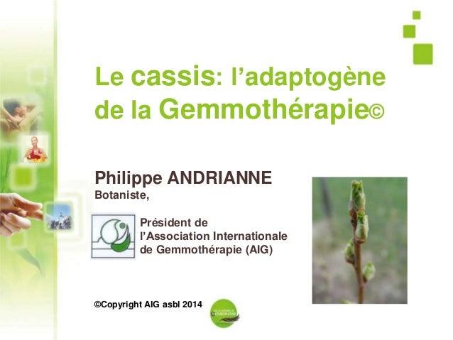 1 Le cassis: l'adaptogène de la Gemmothérapie© Philippe ANDRIANNE Botaniste, Président de l'Association Internationale de ...