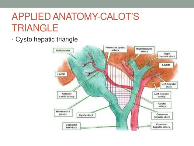 Congenital Anamolies And Applied Anatomy Of Biliary Tree