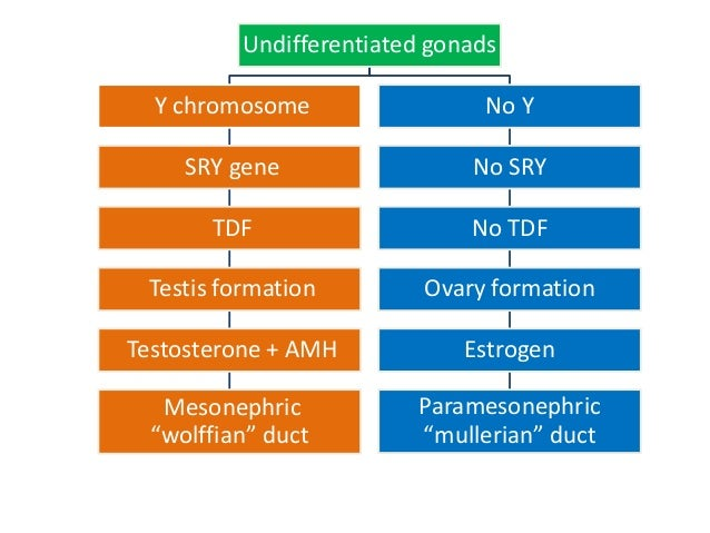Congenital anomalies of female reproductive system Slide 3