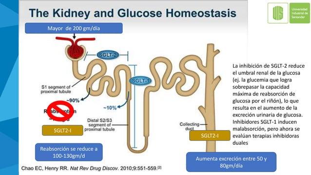 Resumen inhibidores SGLT2 Diabetes Care 2015;38:2344