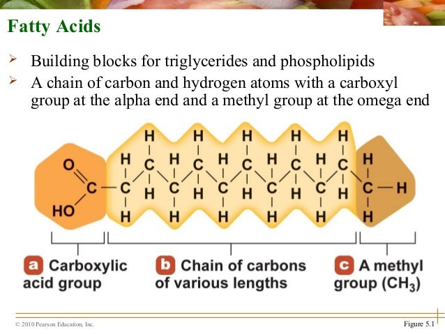 Building Blocks Of Fats And Lipids