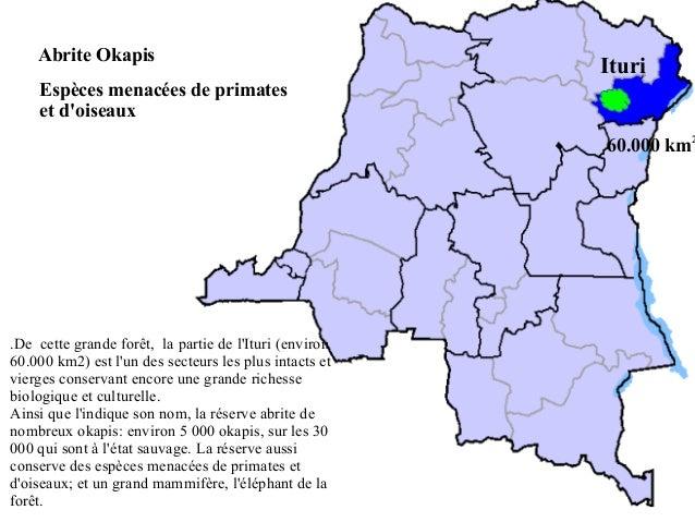 Abrite Okapis  Ituri  Espèces menacées de primates et d'oiseaux  60.000 km2  .De cette grande forêt, la partie de l'Ituri ...