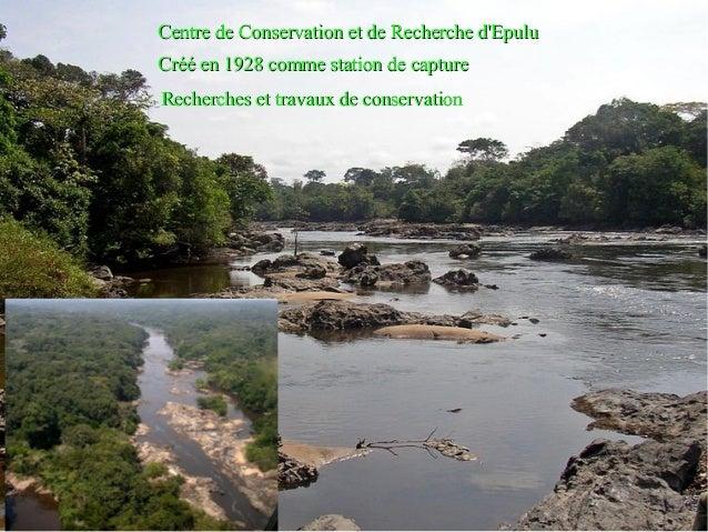 Centre de Conservation et de Recherche d'Epulu Créé en 1928 comme station de capture Recherches et travaux de conservation