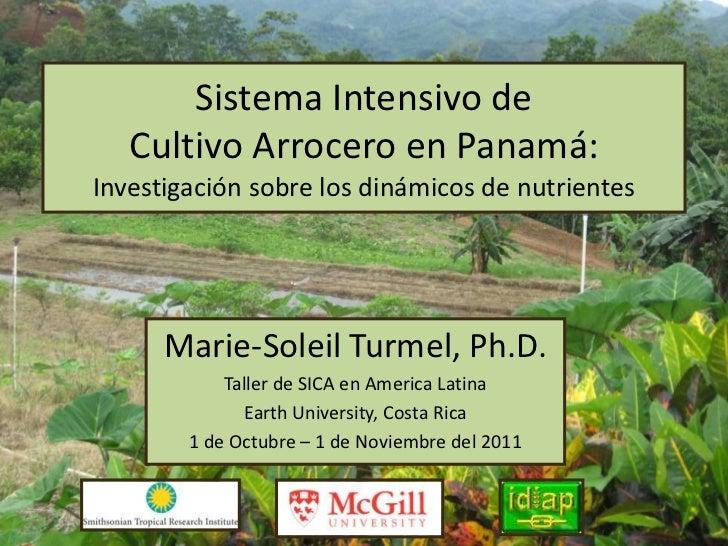 Sistema Intensivo de   Cultivo Arrocero en Panamá:Investigación sobre los dinámicos de nutrientes      Marie-Soleil Turmel...