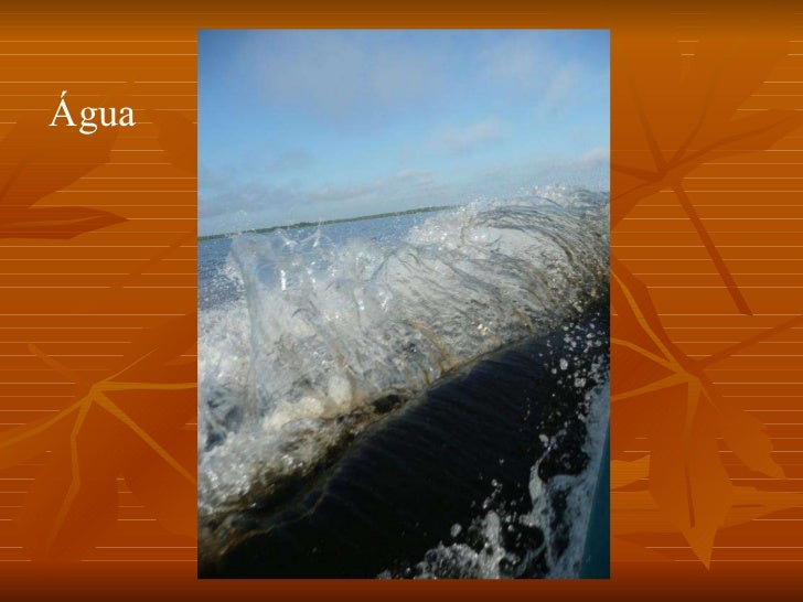 Conheça o Amazonas Slide 2
