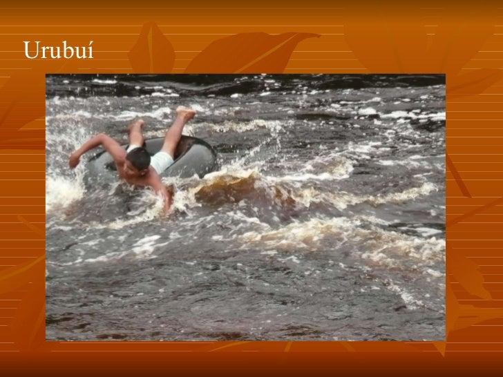 Conheça o Amazonas Slide 3
