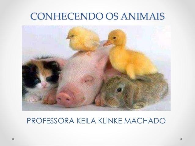 CONHECENDO OS ANIMAIS  PROFESSORA KEILA KLINKE MACHADO