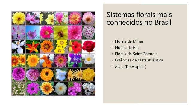 FLORAIS DE MINAS PARA PETS