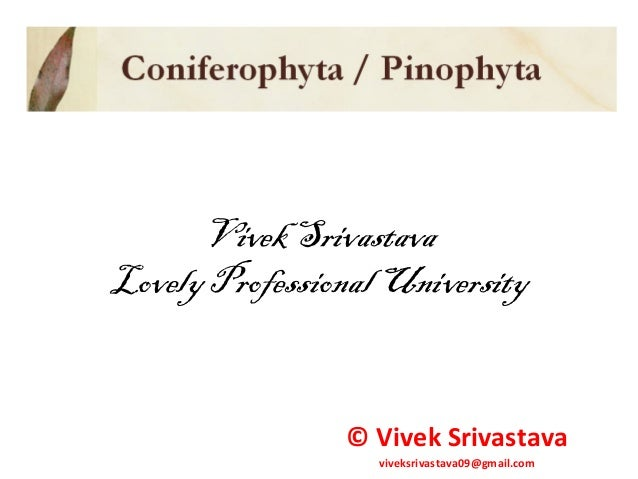 Vivek Srivastava Lovely Professional University © Vivek Srivastava viveksrivastava09@gmail.com