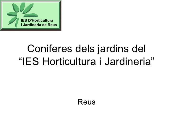 """Coniferes dels jardins del """"IES Horticultura i Jardineria"""" Reus"""