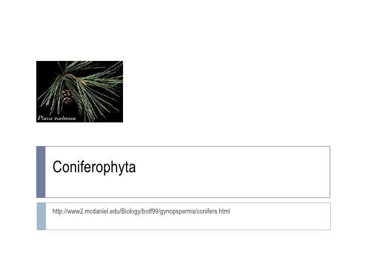 Coniferophyta http://www2.mcdaniel.edu/Biology/botf99/gynopsperms/conifers.html