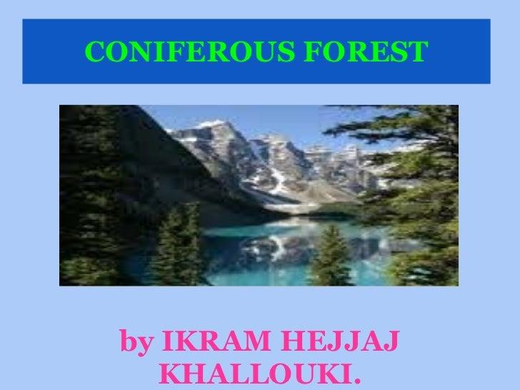 CONIFEROUS FOREST <ul><li>by IKRAM HEJJAJ KHALLOUKI. </li></ul>