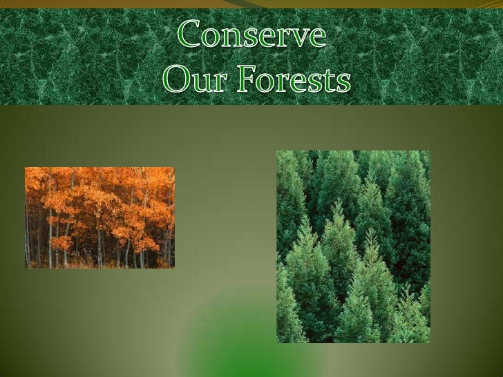 Positive Impact                •Forests have natural beauty               and lots of oxygen stored in               their...