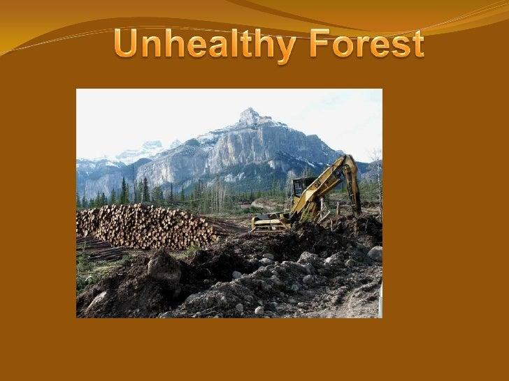 Coniferous Powerpoint Show