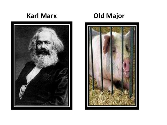 karl marx and old major Old major represents karl marx in animal farm because he taught animalism, workers do the work, rich keep the money, animals revolt, and he dies before the revolution.