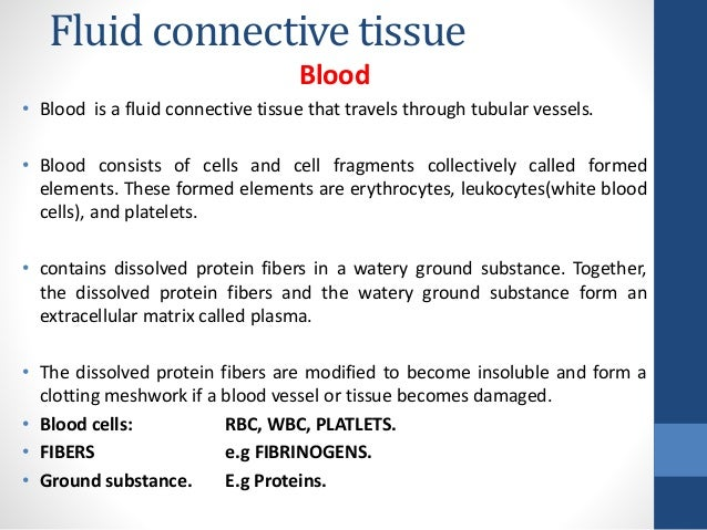 fluid connective tissue Connective tissue - blood & blood forming tissues blood is considered a connective tissue for two basic reasons: (1) embryologically, it has the same origin.