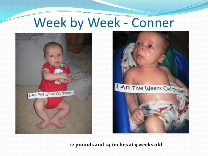 Week by Week - Conner<br />12 pounds and 24 inches at 5 weeks old<br />